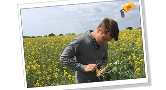 Controlling Cabbage Stem Flea Beetle with intercropping/trap crops
