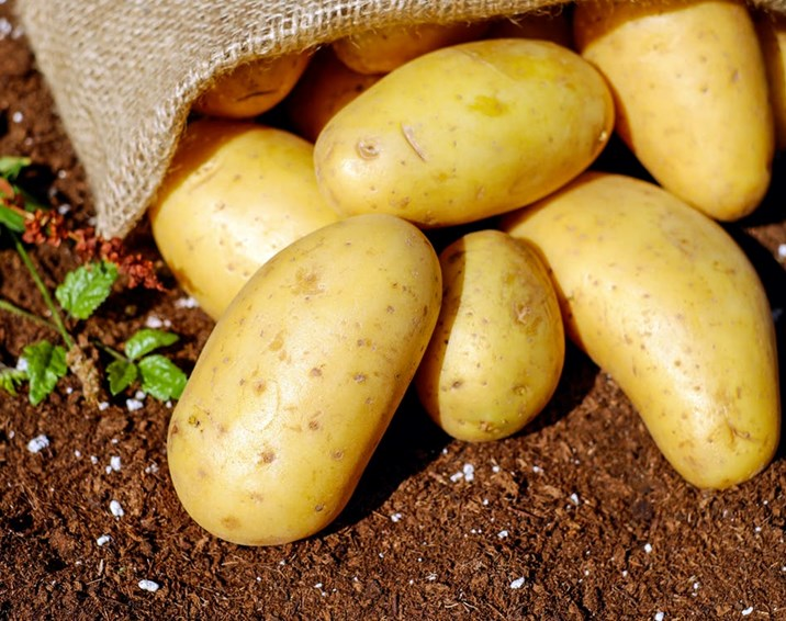 Farmers, growers and industry members unite to save Scotland's potato industry
